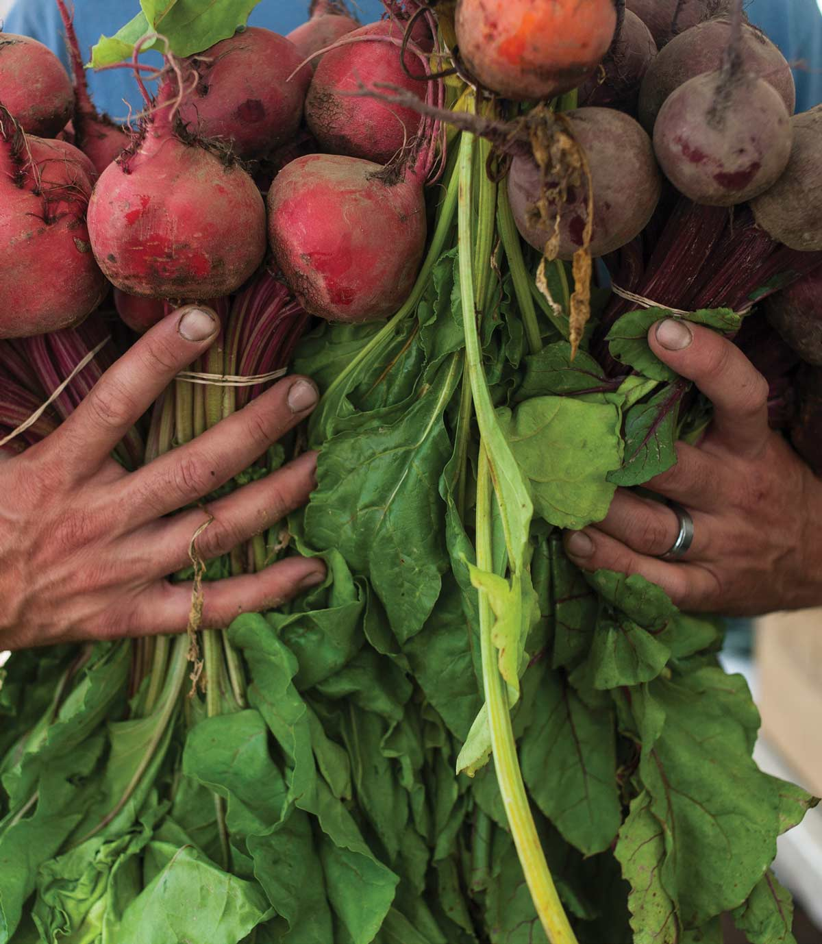 Image of beets